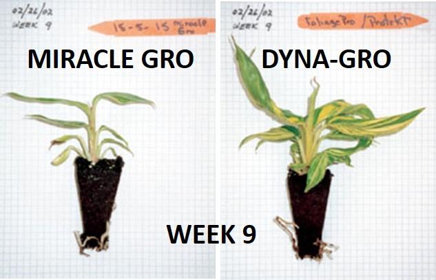 Dyna-Gro (All-In-One Formula)